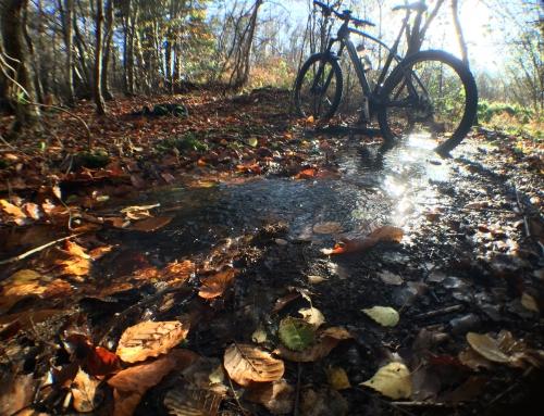 Bike – Silverback Syncra 2