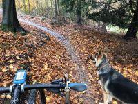 QE Park trail