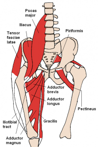 Anterior_Hip_Muscles_2