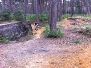 Swinley Forest Red Loop